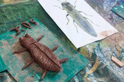 Clay beetle
